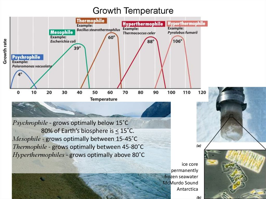Growth Temperature