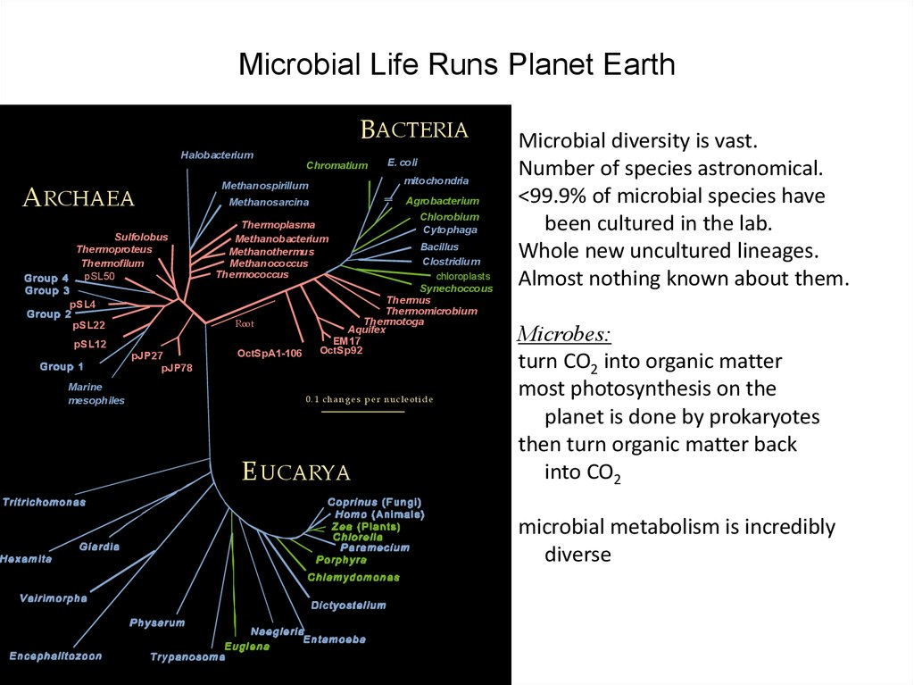Microbial Life Runs Planet Earth
