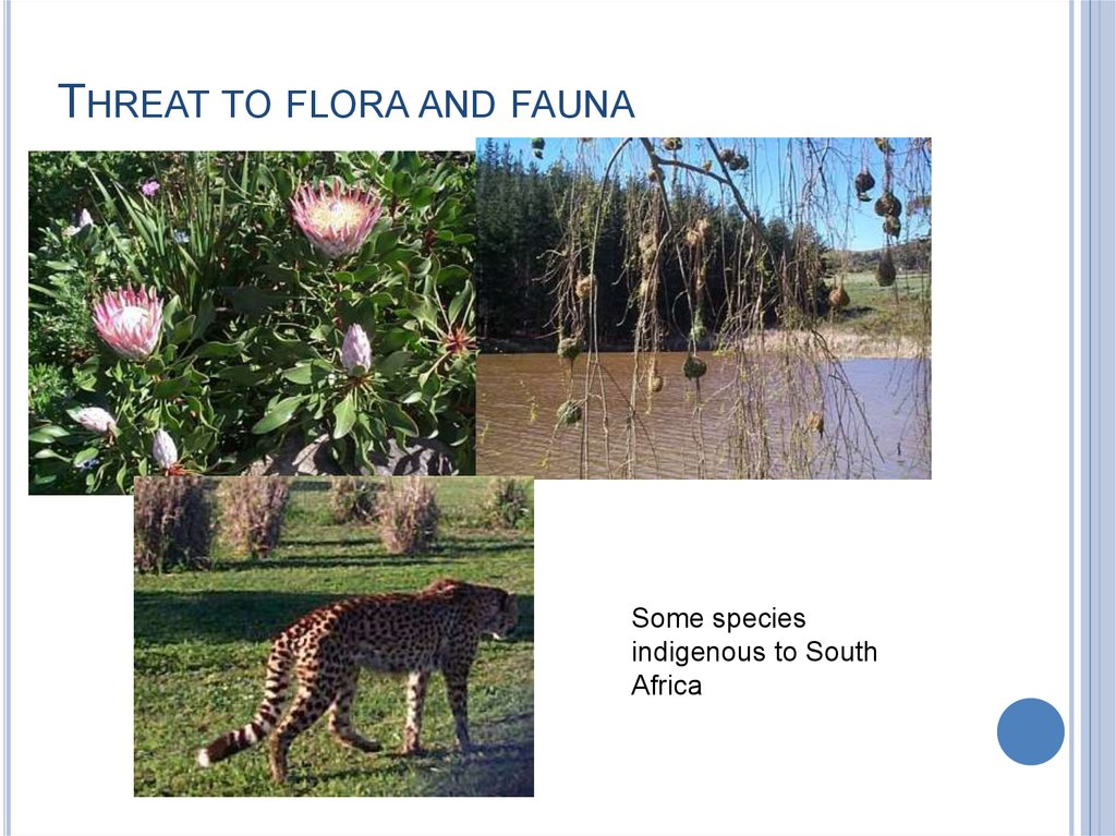 THREAT TO FLORA AND FAUNA