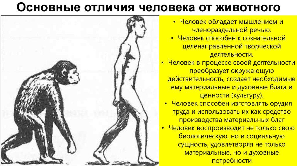 чем отличается обезьяна от человека картинки стрекоза фотографии эскизы