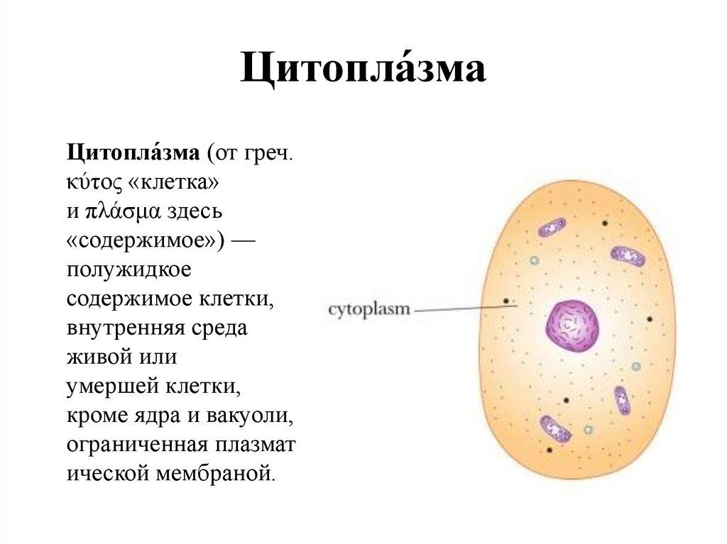 картинки цитоплазма клетки рецепты огурцов