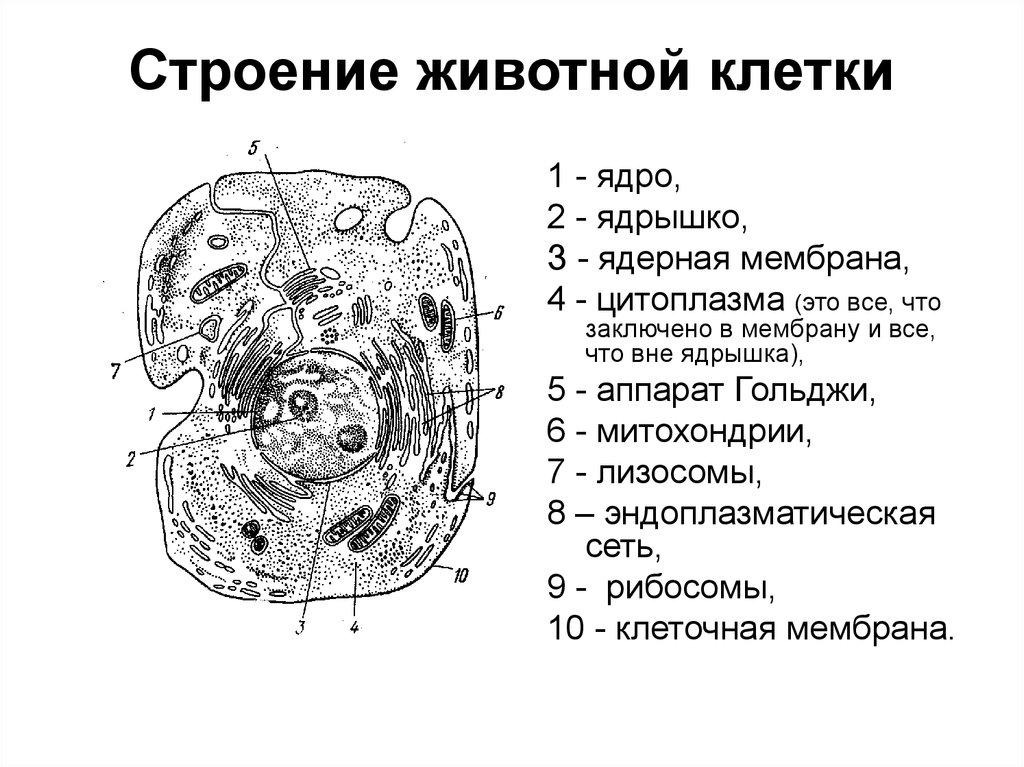 номерах картинки строение клеток животного что среди