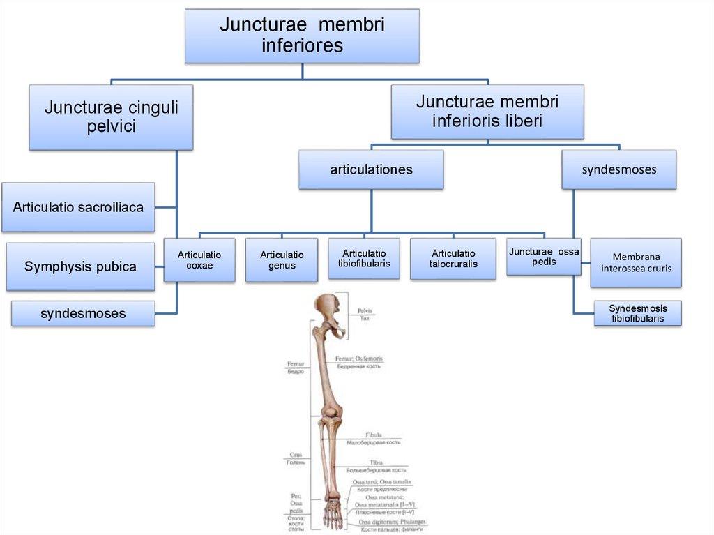 metronidazol pentru dureri articulare durere în articulația piciorului la care medicul