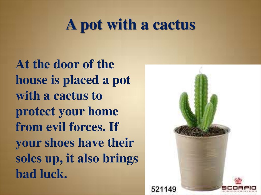 A pot with a cactus