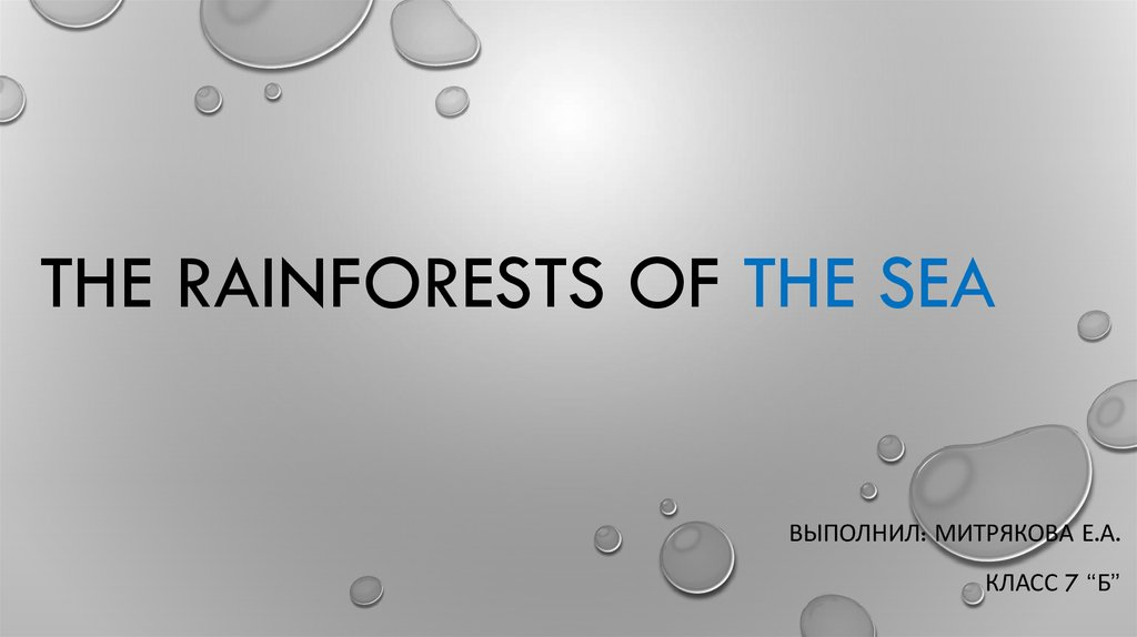 The Rainforests of the Sea