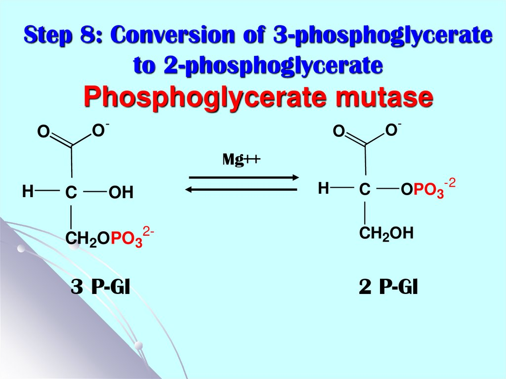 Step 8: Conversion of 3-phosphoglycerate to 2-phosphoglycerate Phosphoglycerate mutase
