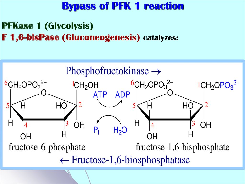 Bypass of PFK 1 reaction