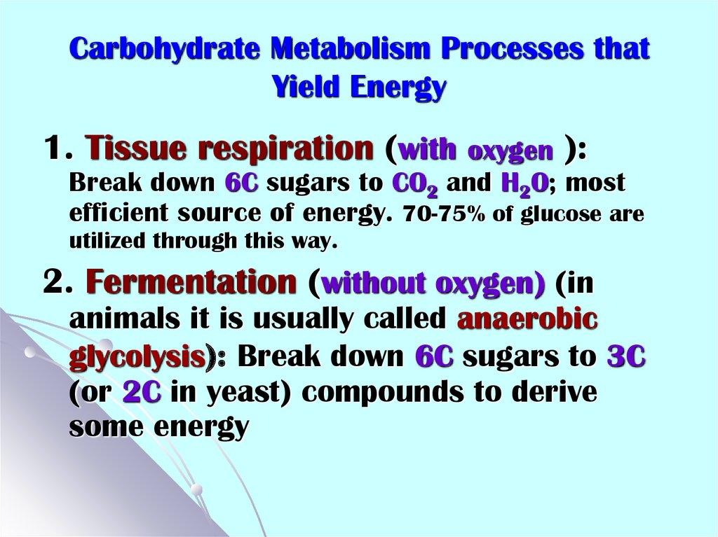 Carbohydrate Metabolism Processes that Yield Energy
