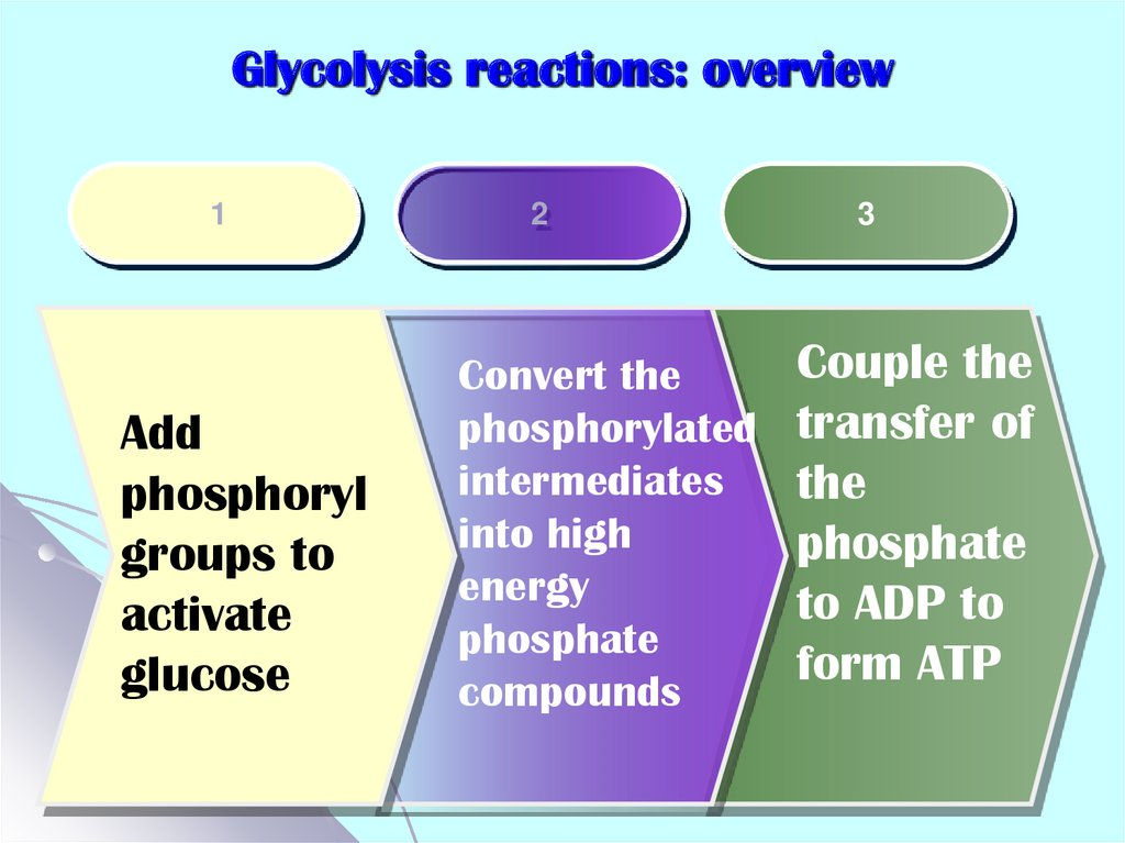 Glycolysis reactions: overview