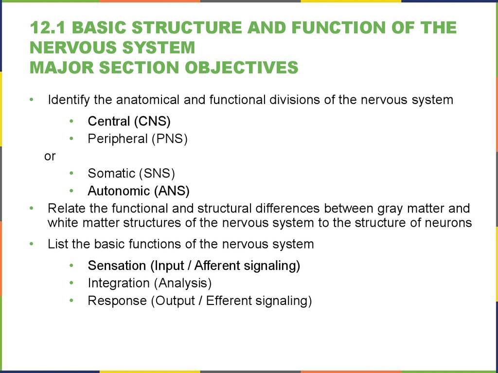 12.1 Basic Structure and Function of the Nervous System Major section Objectives