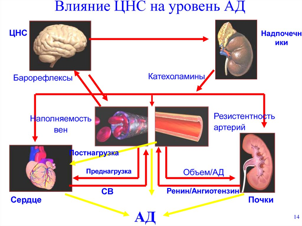 Гипертоническая болезнь. Гипертония, причины заболевания ...