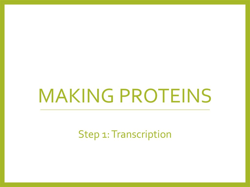 Making Proteins