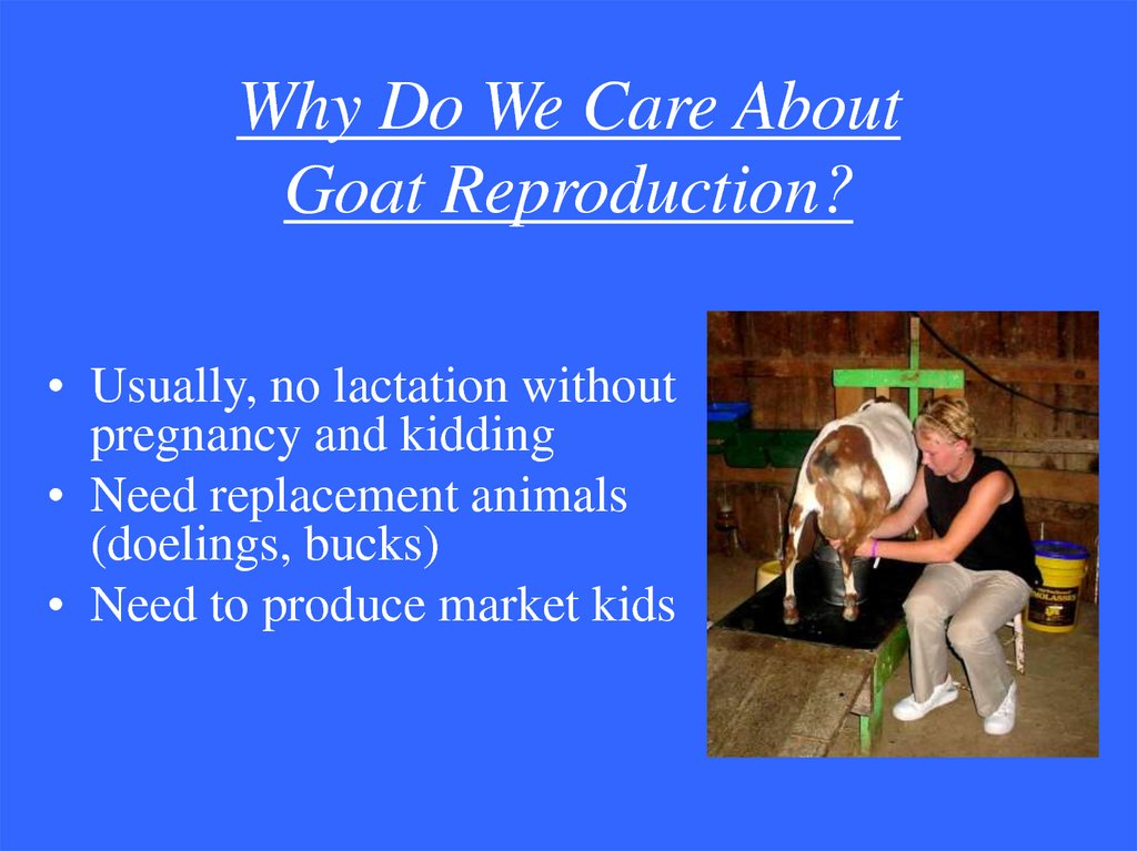 Why Do We Care About Goat Reproduction?
