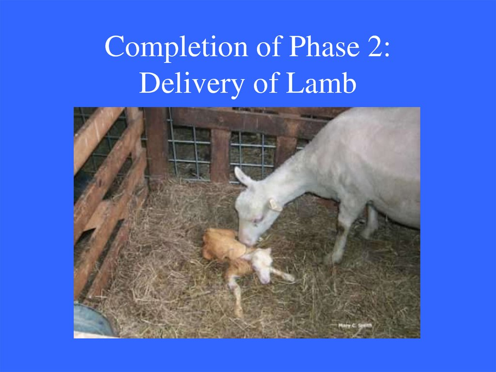 Completion of Phase 2: Delivery of Lamb