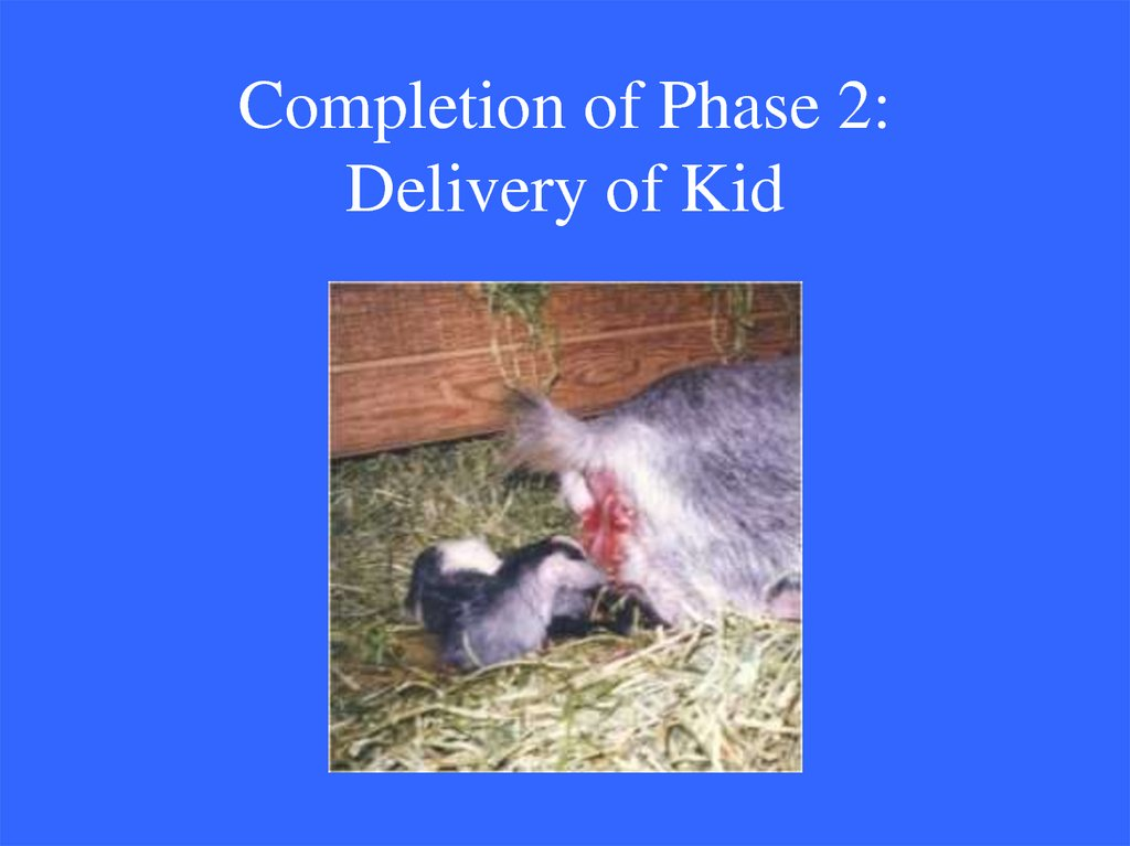 Completion of Phase 2: Delivery of Kid