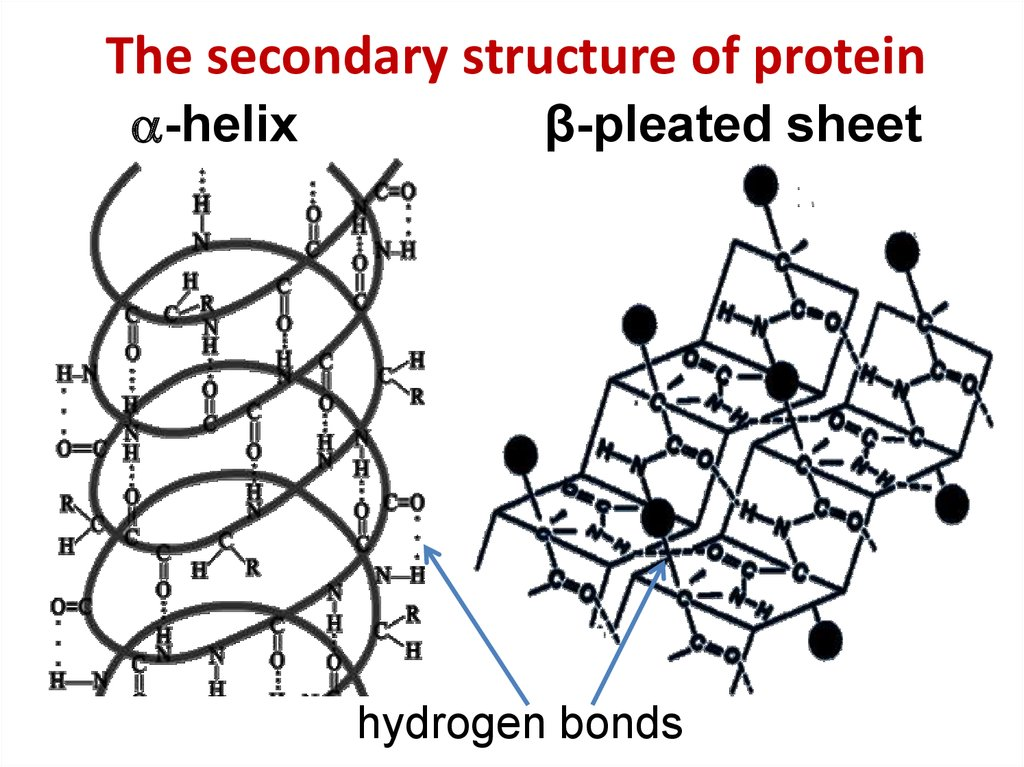 The secondary structure of protein