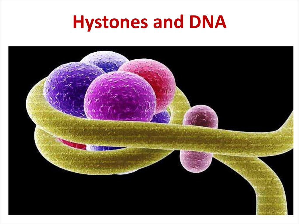Hystones and DNA