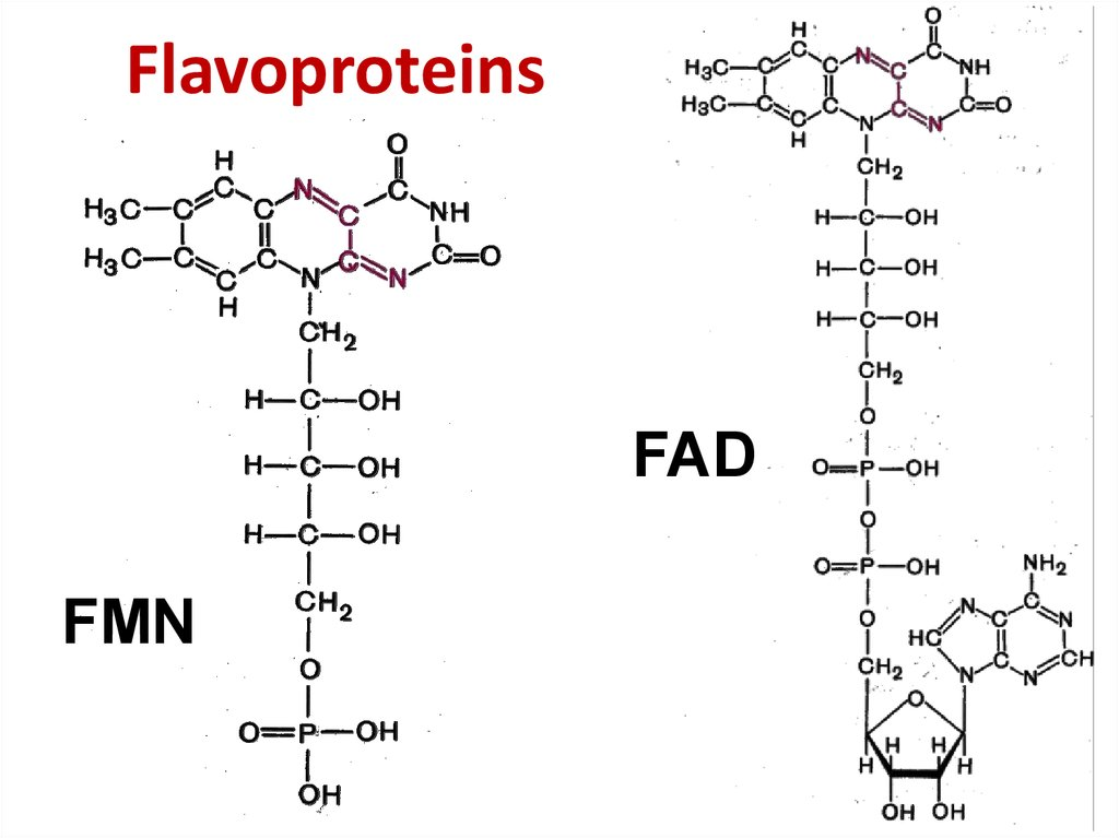 Flavoproteins
