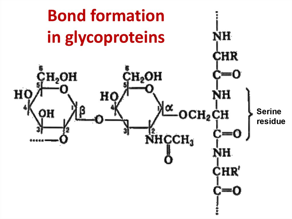 Bond formation in glycoproteins