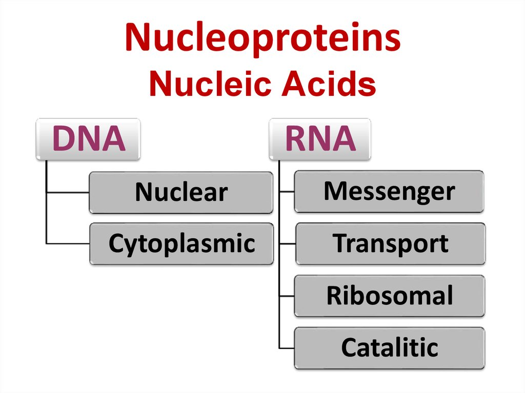 Nucleoproteins Nucleic Acids