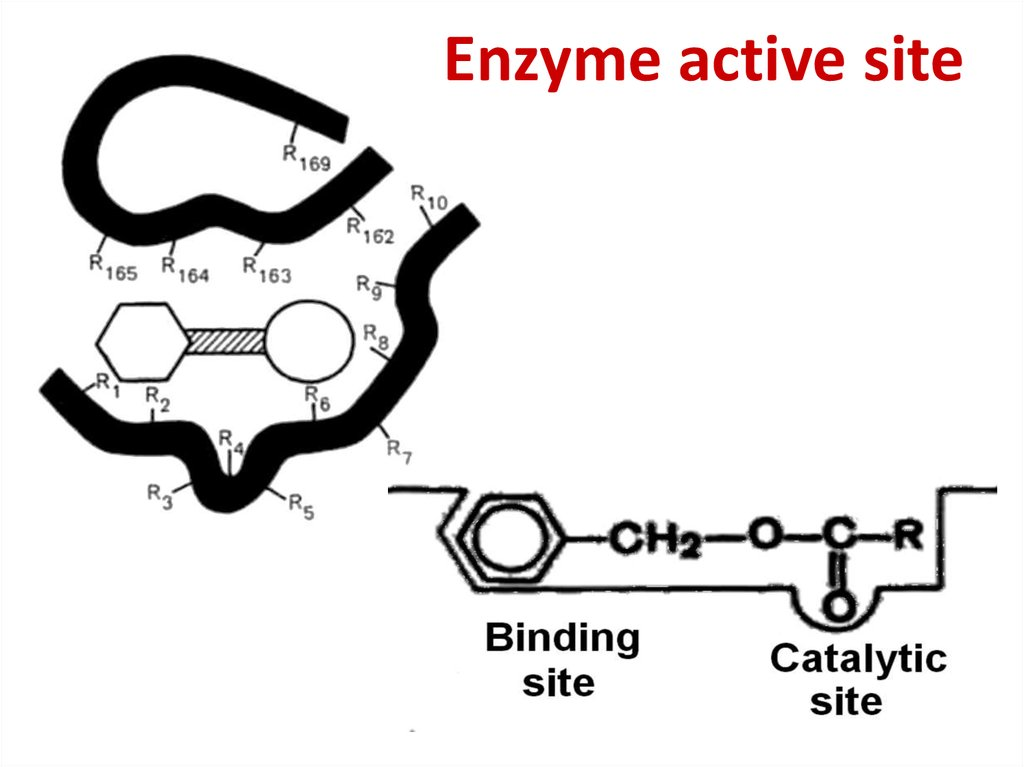 Enzyme active site