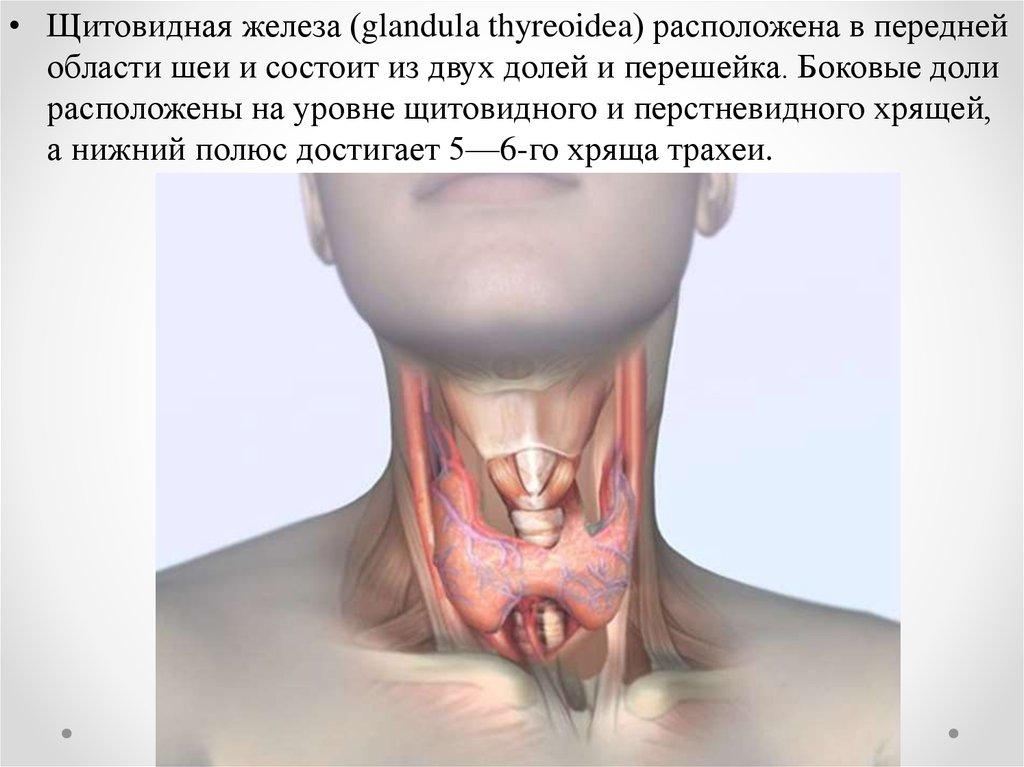 похудела из за щитовидной железы