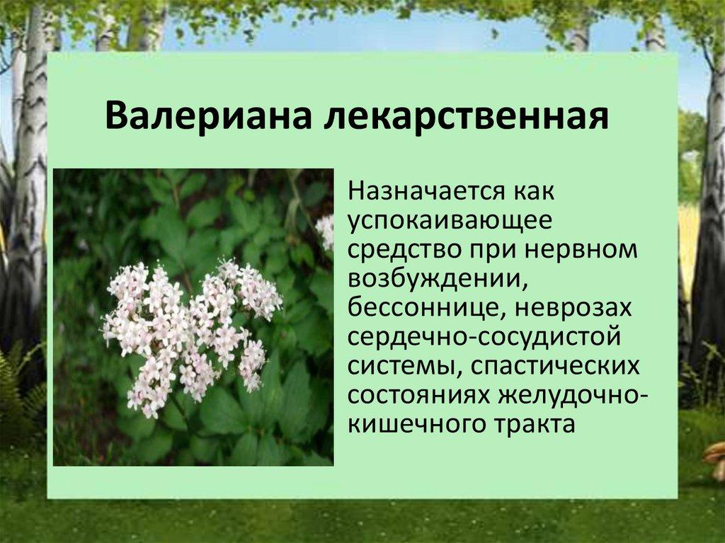 лекарственные растения нижегородской области фото и описание мебель рыбнице адресами