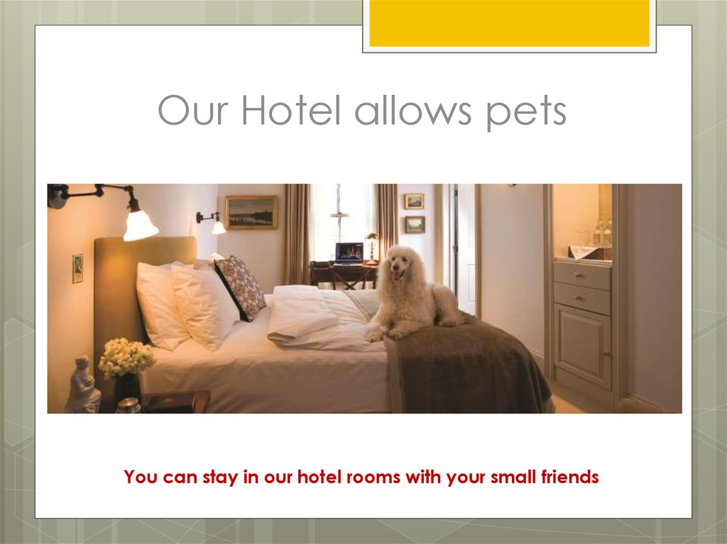 Our Hotel allows pets