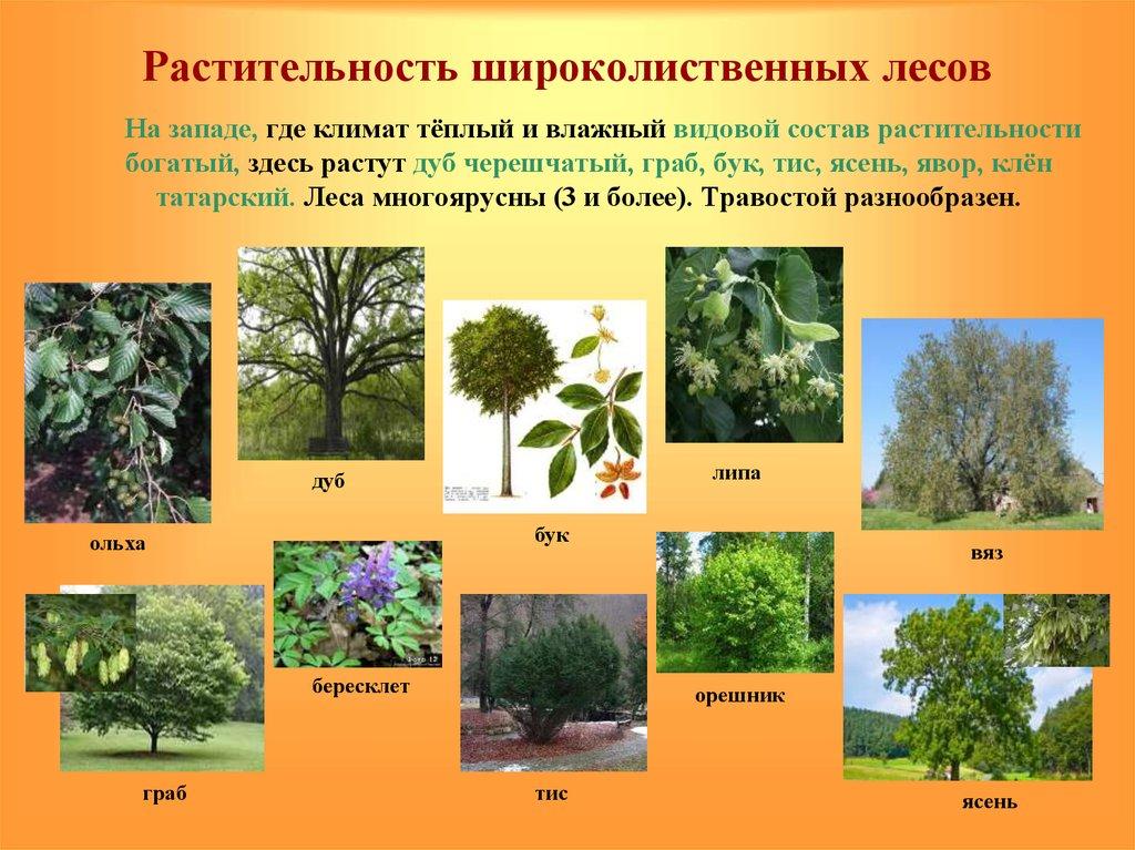 цветы смешанных лесов названия и картинки твоего