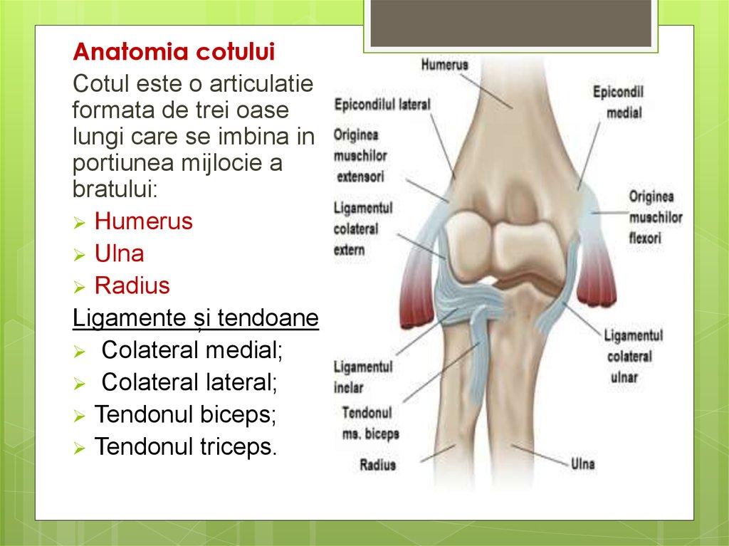 inflamație la nivelul articulației cotului)