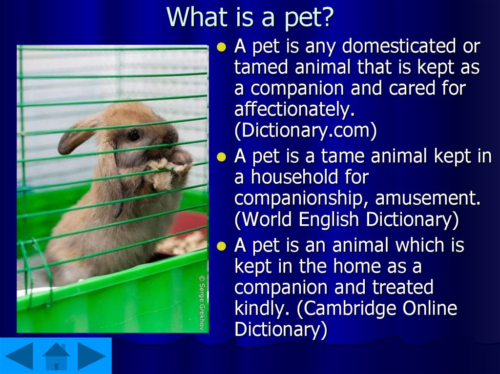 What is a pet?