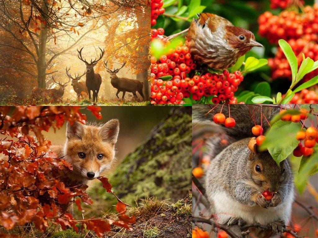 многоуровневые заведения осень в жизни животных картинки место для