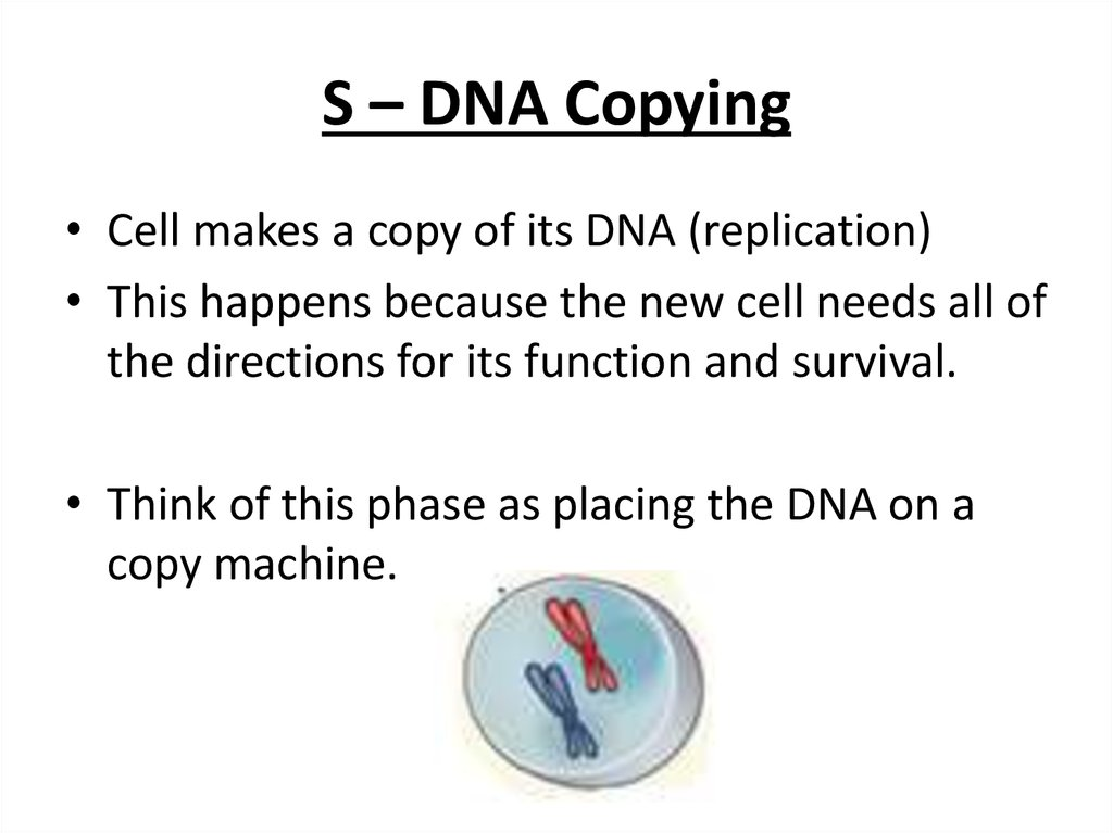 S – DNA Copying
