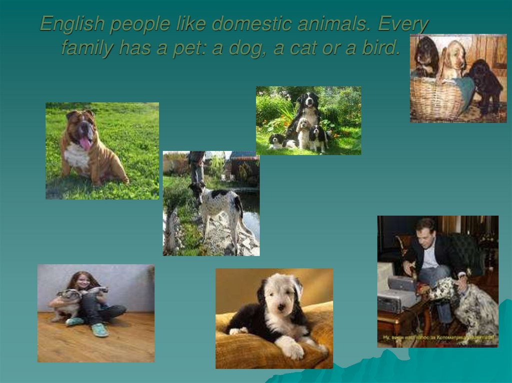 English people like domestic animals. Every family has a pet: a dog, a cat or a bird.