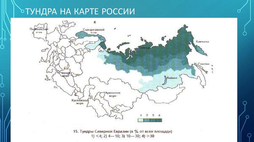 разработке новейшего где находится тундра на карте россии фото нас можете выбрать