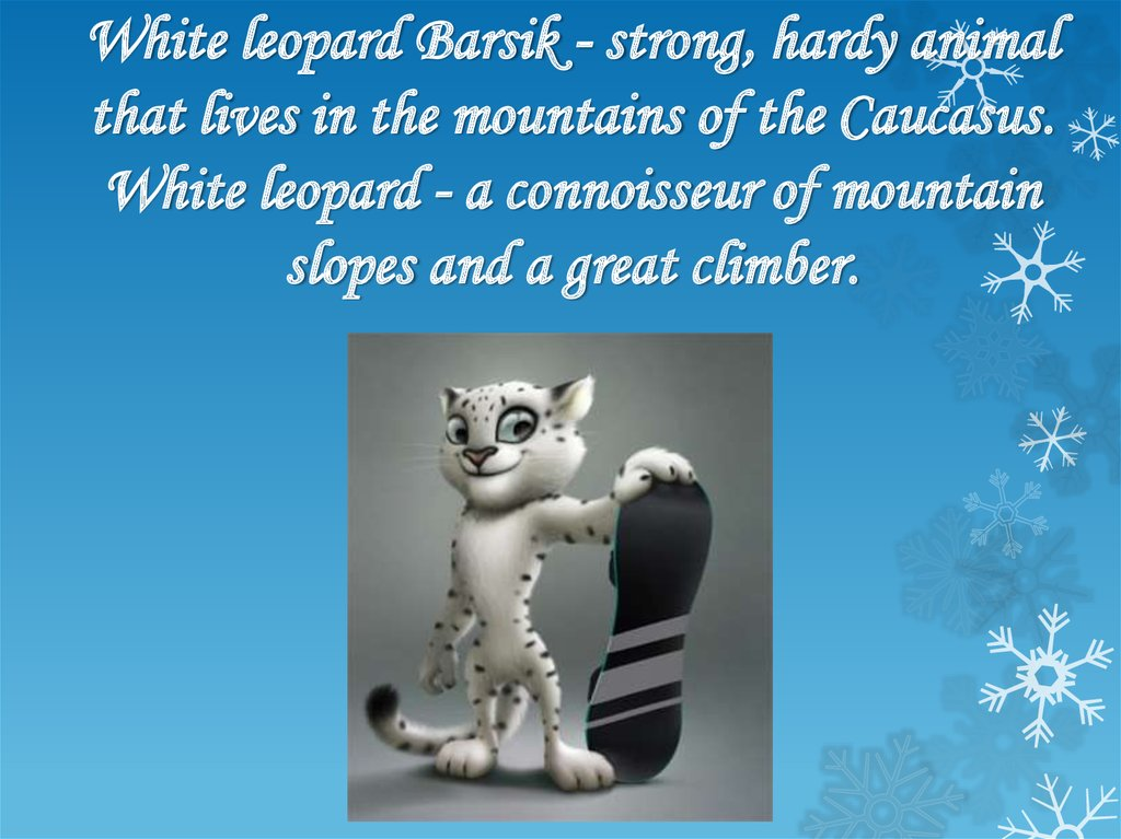 White leopard Barsik - strong, hardy animal that lives in the mountains of the Caucasus. White leopard - a connoisseur of