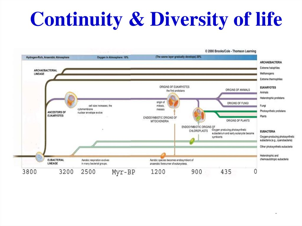 Continuity & Diversity of life