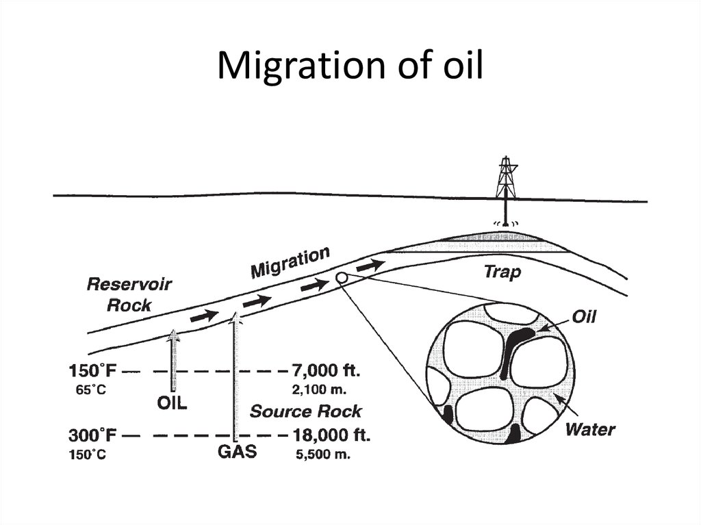 Migration of oil