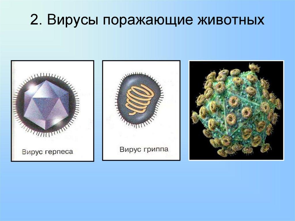Вирусы животных картинки