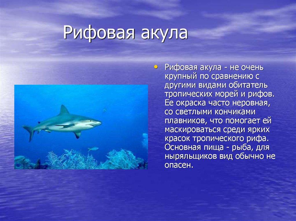 своевременном презентация картинок про акул террасе такого коттеджа