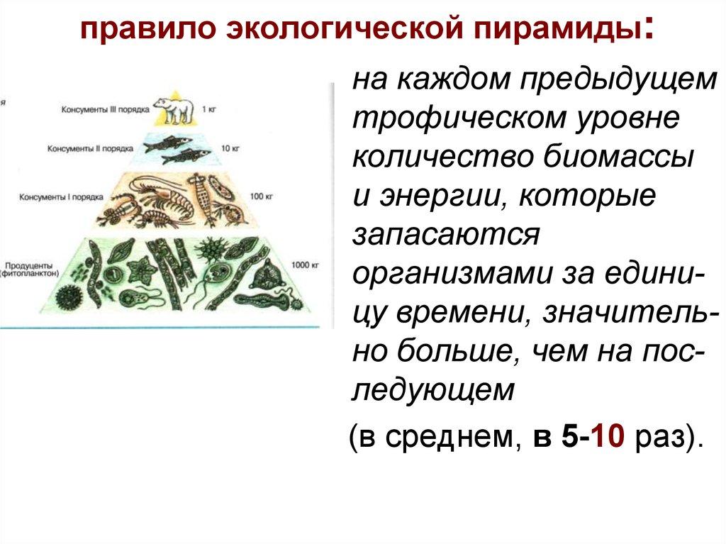 Решение задач по экологии экологическая пирамида решение задач егэ 5 класс