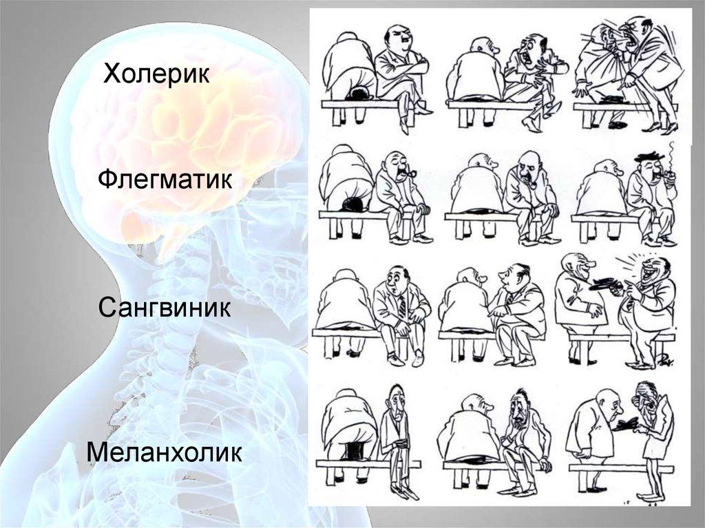 Картинка холерик сангвиник флегматик и меланхолик
