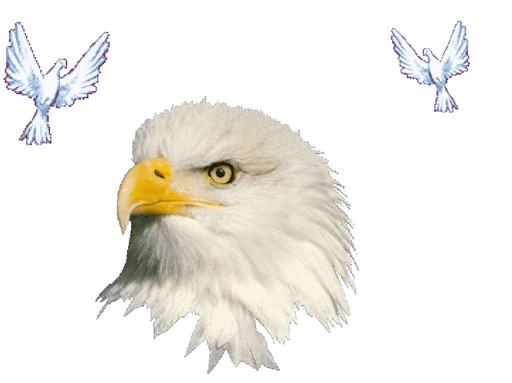 всех гиф орел без фона лабрадор