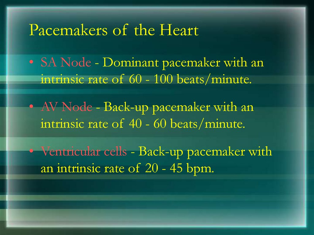 Pacemakers of the Heart