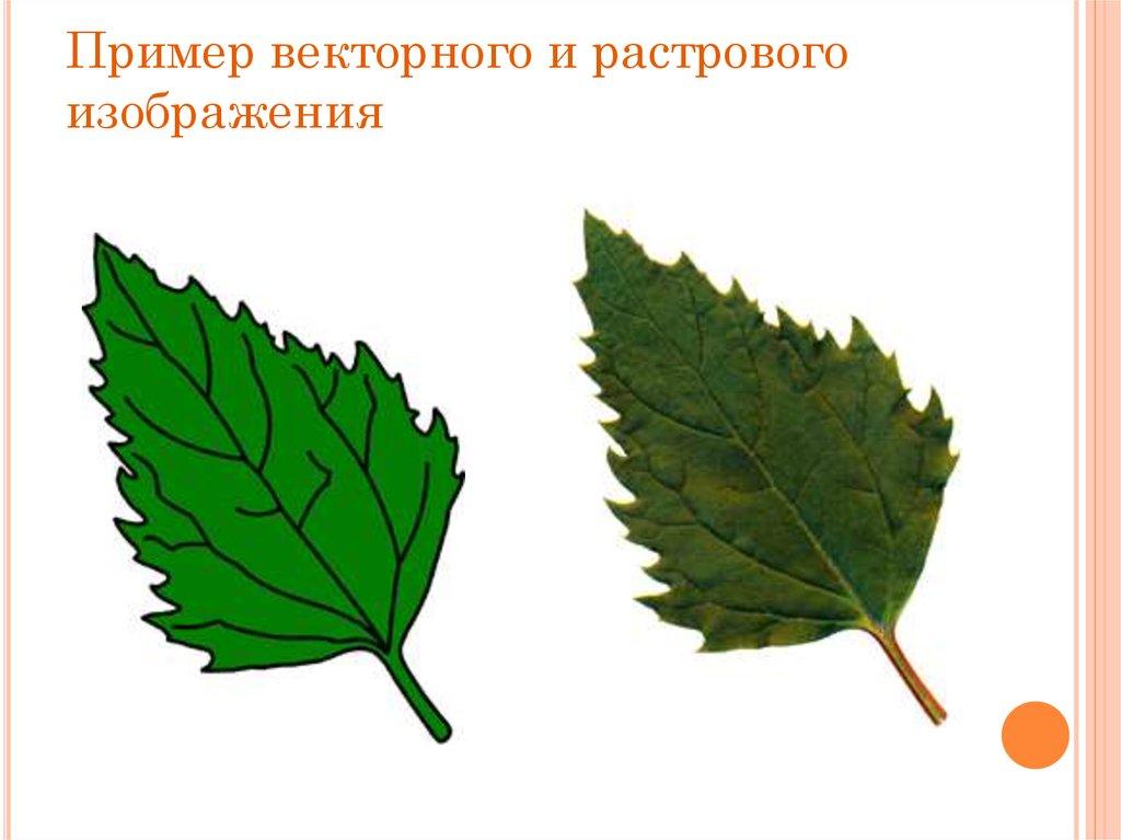 картинки в векторной и растровой графики
