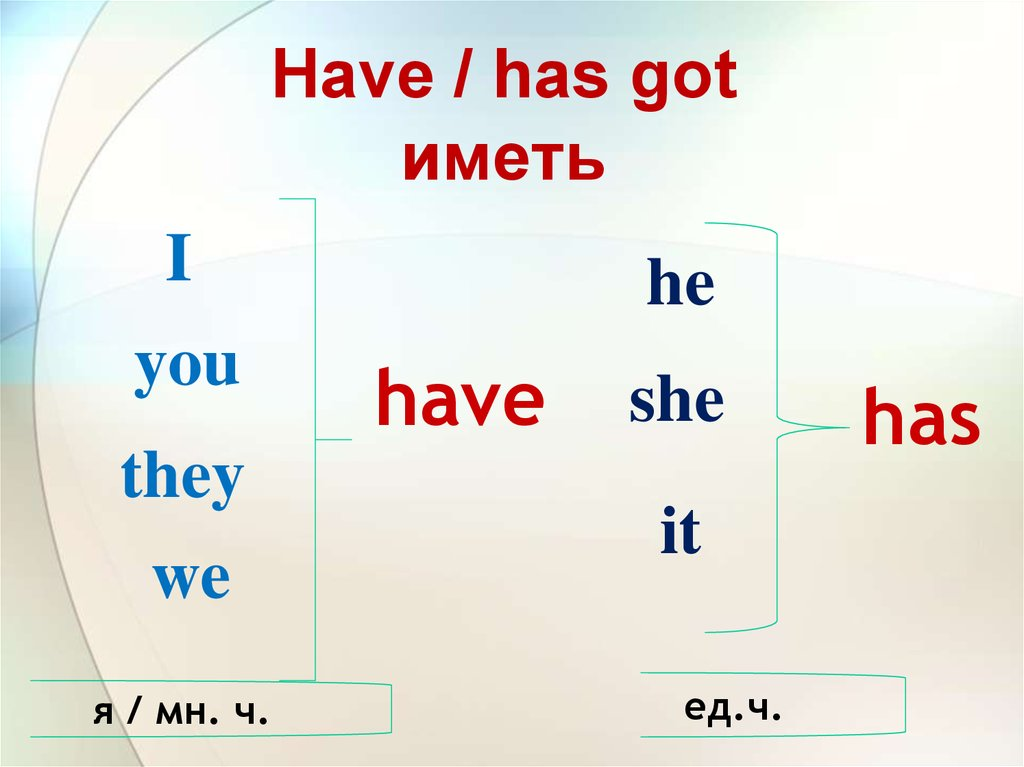 Have / has got иметь