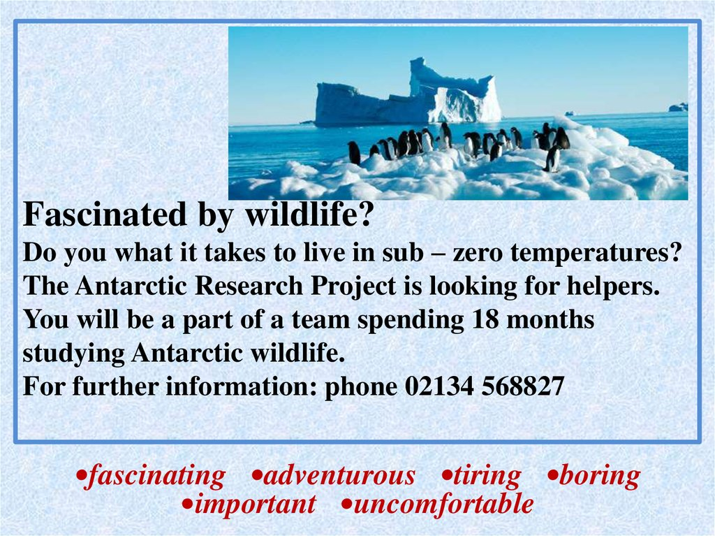Fascinated by wildlife? Do you what it takes to live in sub – zero temperatures? The Antarctic Research Project is looking for