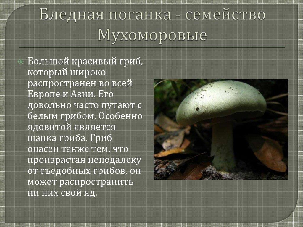 лучшем состоянии ядовитые грибы фото и описание кратко сразу все варианты