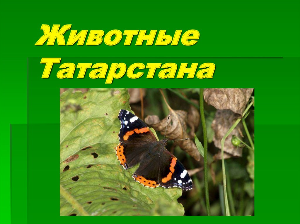 люблю животные татарстана фото с названиями том