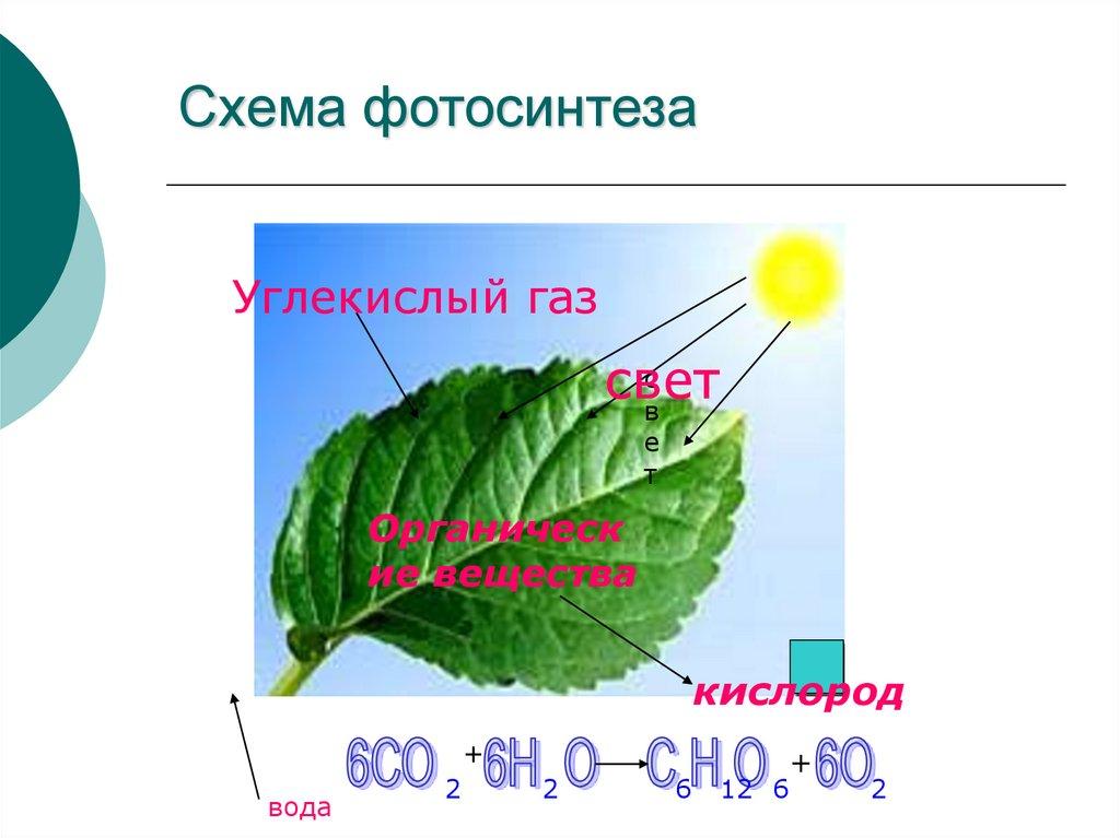 схема фотосинтеза отмечена буквой для